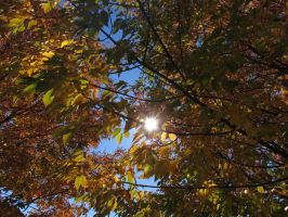 Autumn Leafs by Toderico