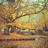Amber Autumn II by Oer-Wout