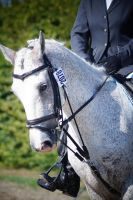 Grey Pony - Eventing Stock 1.5 by MagicLecktra