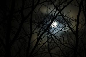 Moon behind Tree by korrox