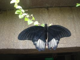 Butterfly 1 by Wyrd-Sistas-Stock
