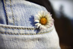Flower in my pocket by DVio26