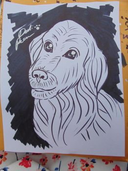 Golden Dog Caricature by Caricatures-By-Dali