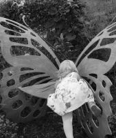 butterfly wings by greenbaypara