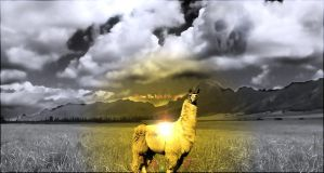 Llamas: The light of the world by yagozs