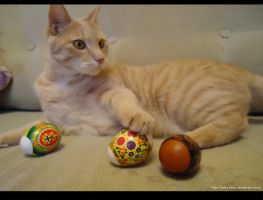 Cat with eggs by Extra-Fenix
