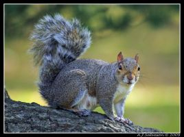 Squirrel On Log by andy-j-s
