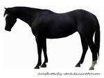 black horse by JuneButterfly-stock