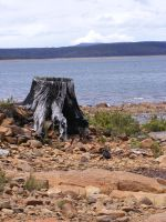 Tree Stump And Water by Gracies-Stock
