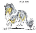 Rough Collie in Paint by TussenSessan