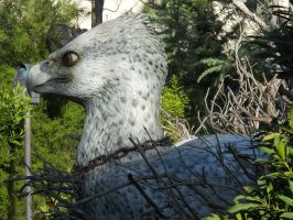 Hippogriff pic2 by ToaDJacara