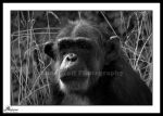 Thinking in Black and White by LoneWolfPhotography