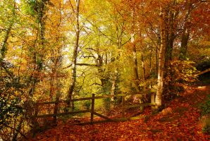 Belvoir Forest Fence, Autumn by Gerard1972