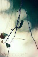 broken wings by verniceR