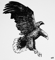 inktober01 - white-tailed eagle by iva-draws