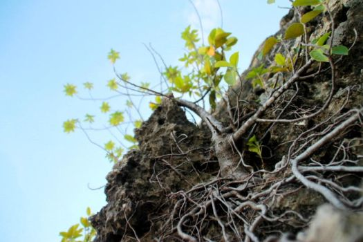 Roots by cobain57