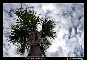 The Palm of the Sky by richardxthripp