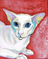 Blue Eyed Cat by Paul5252