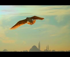 Istanbul under my wings by TuRKoo