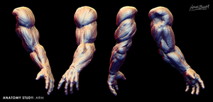 Arm Study by ninokiboom