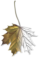 Maple leaf _sketch_ by JumpOrDie