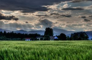 TheField by gregor-hie
