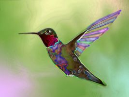 Hummingbird by minimoo64
