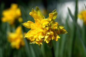 Flower Stock Yellow II by Moonchilde-Stock