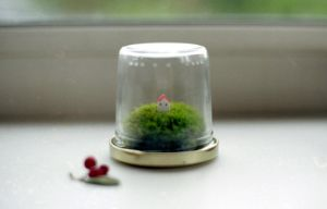 small moss terrarium by million-dandelions