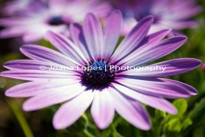 Flower4 by dreamers-photography