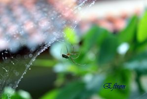 Img 0878-001 by eftron