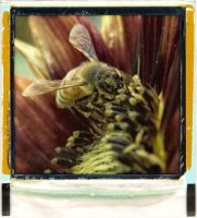 bee by fotocali