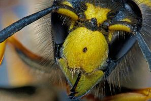 Wasp by mant01