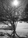 The Snow Tree by kandroid96