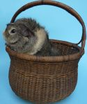 Fred in a basket by Mrs-Yum-Yums
