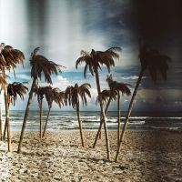 palms by Fraggles