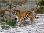 Zoo_019_Apr_10 by pricecw-stock