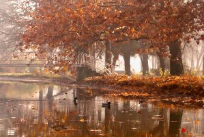 Swimming in autumn by Bojkovski