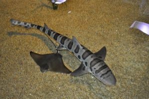 Leopard Shark and Bat Ray by Firepoppy