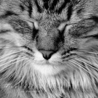 The s e r a p h i c cat by GiuliaDepoliART