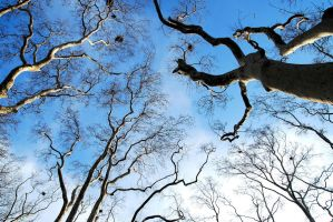 36- Blue Dreams... by salihagir