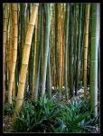 Bamboo by g4mbit