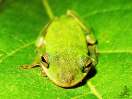 Green Watcher by OECDLapushfan101