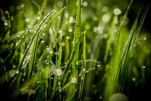 early morning dew by DanielGliese