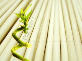 Bamboo by icube001
