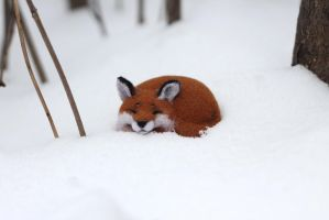 Sleeping fox by Irentoys