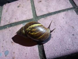 Snail 5Oct2014 by RiverKpocc