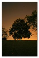 One Tree Hill by pwm
