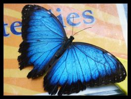 Blue Butterfly by morpheusredux