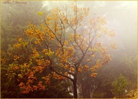 Colors in the fog by ShlomitMessica